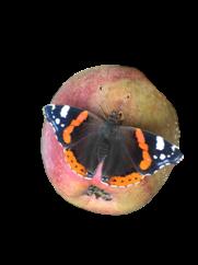 pomme-et-papillon_site.png